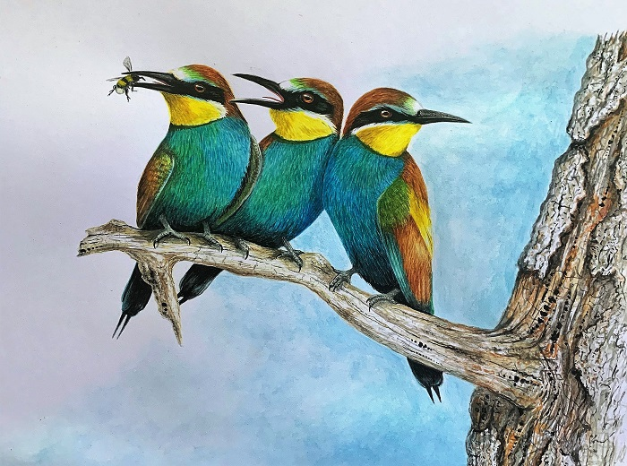Steve Bird's Bee-eaters